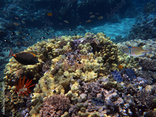 Pinturas sobre lienzo  Coral Reef and Tropical Fish in the Red Sea