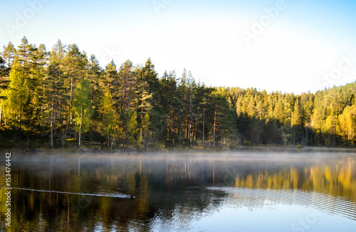 Photo duck swimming at misty silent lake