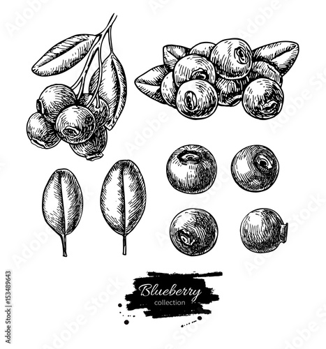 Obraz na plátně Blueberry vector drawing set. Isolated hand drawn berry, heap, b