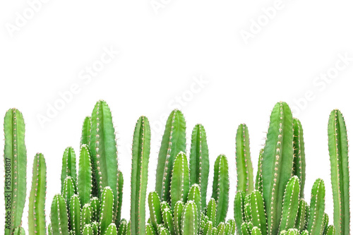 Fotografiet  Cactus on isolated background