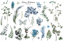 Big Set Watercolor Elements - Wildflowers, Herbs, Leaf. Collection Garden And Wild Herb, Flowers, Branches.  Illustration Isolated On White Background, Eucalyptus, Exotic, Tropical Leaf.