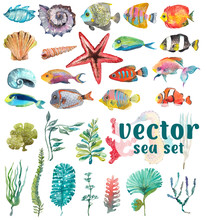 Watercolor Sea Life, Seaweed, ...