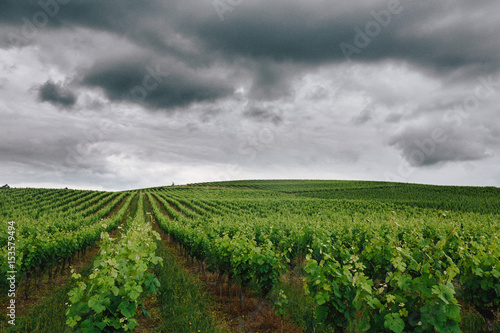 Papiers peints Vignoble Italian Vineyard