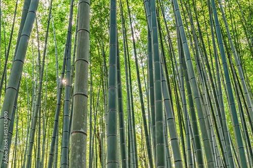 Foto op Plexiglas Bamboe Bamboo Grove in Adashino Nenbutsu-ji Temple
