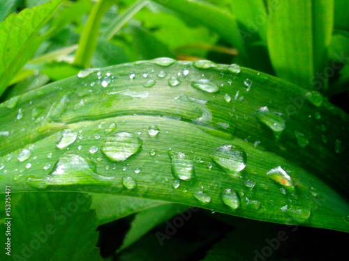 Large and small drops of dew on a green blade of grass, texture