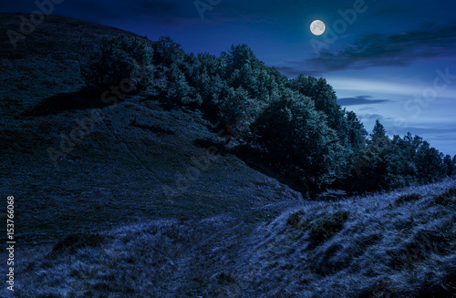 path through forest on hillside meadow at night Poster