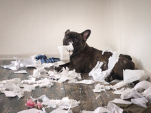 Funny Dog Made A Mess In The R...