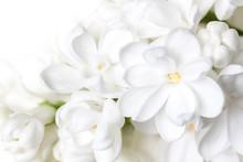 White Lilac Flowers Blossom Wa...