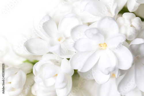 Foto op Canvas Lilac White lilac flowers blossom wallpaper . Floral motif background.