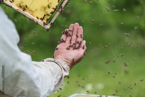 Plakat Zakończenie up strzelał mężczyzna ręki mienia rama z pszczoła woskiem. Selektywna ostrość.