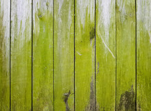 Wooden Fence Covered In Green ...