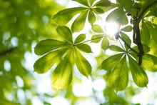 Background Of Fresh Green Leav...