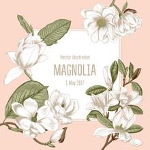 Магнолия. Цветы. Векторная иллюстрация в стиле винтаж. Ботаника. Классическая открытка в растительным узором.