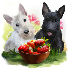 Two Scotties And Strawberries
