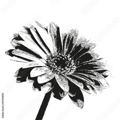 Photo sur Toile Empreintes Graphiques petali fiore