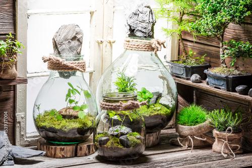 Rain forest in a jar as save the earth idea