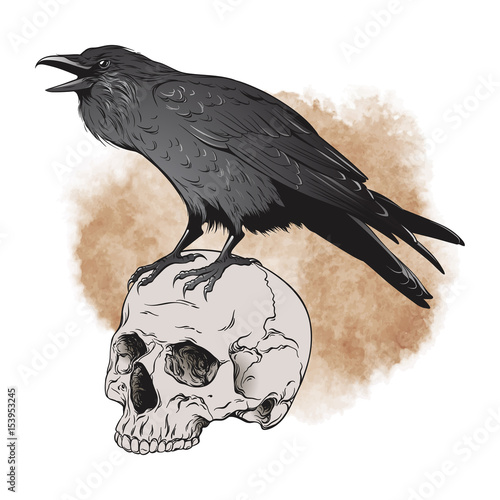 Raven and skull on sepia background vector illustration Canvas Print