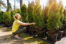 Woman Choosing Coniferous Tree At Outdoor Plant Nursery