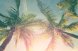 canvas print picture - Tropical landscape with palm trees and sunny sky
