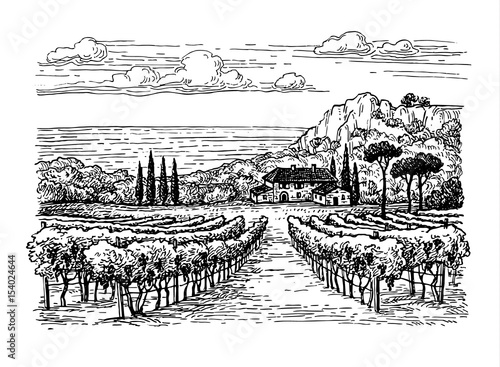 Deurstickers Wit Hand drawn vineyard landscape.