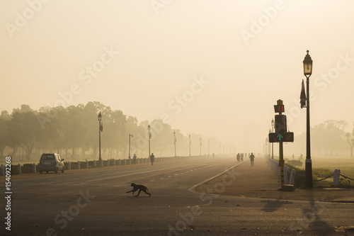 Foto op Plexiglas Delhi monkey in wide city