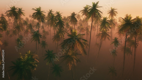 Wysokiego kąta widok drzewko palmowe las w ranek mgle.