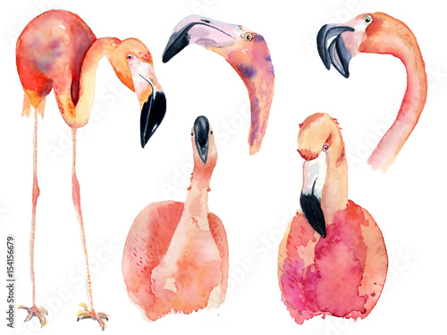 watercolor pink flamingos Fototapet