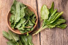 Fresh Sorrel Vegetable