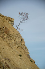 Lonely Tree Standing On Top Of The Mountain Cliff .
