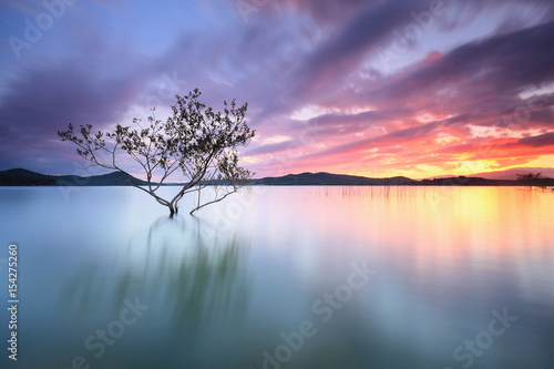 Beautiful sunset over a solitary tree into a lake in Vitoria, País Vasco Fotobehang