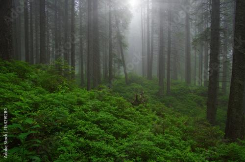 Fototapeten Wald Trees in forest