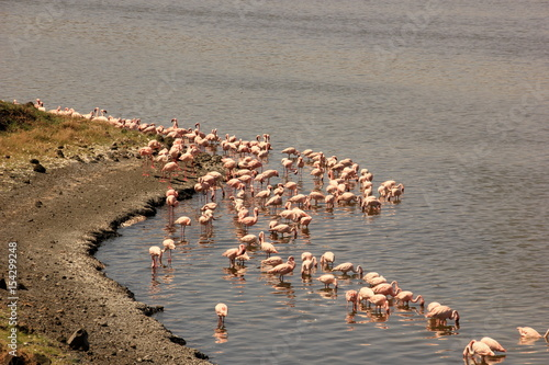Fototapety, obrazy: African wildlife, Tanzania, Ngorongoro Conservation Area