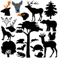 Wildlife At Forest