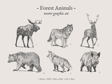 Forest Animals Drawings Set On Grey Background With Moose, Wolf, Deer, Bear, Fox, Boar