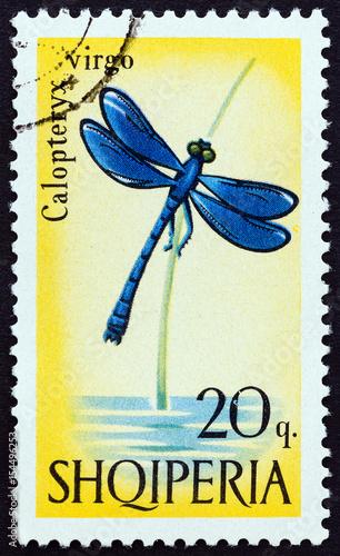 Beautiful demoiselle, Calopteryx virgo damselfly (Albania 1966)