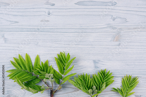 Photo Stands Lily of the valley Young green leaves on light blue wooden board. Decorative spring background with copy space, top view.