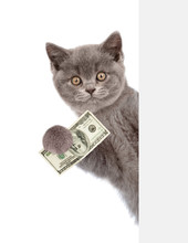 Cat Peeking From Behind Empty Board And Holding Money. Isolated On White Background
