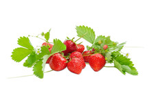 Garden Strawberry And Wild Strawberry With Leaves, Stems And Flowers