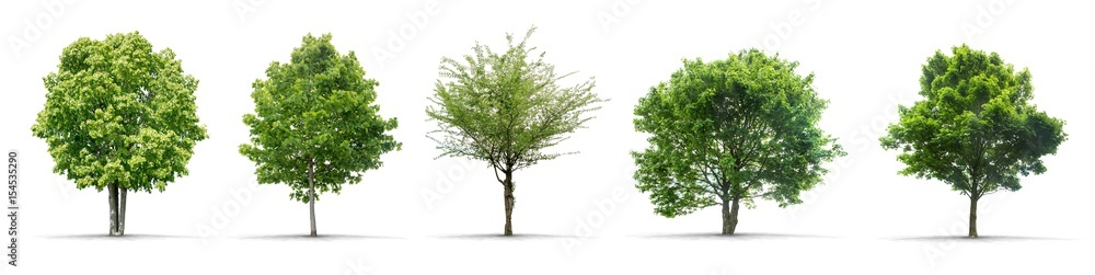 Fototapeta High definition collection Tree isolated on a white background