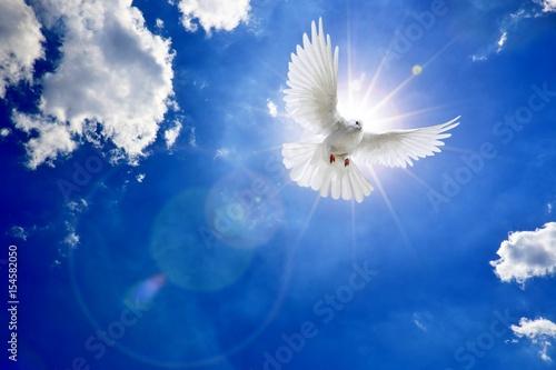 Foto  Weisse Taube am Himmel mit Sonne und Wolken