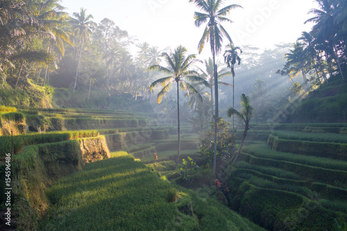 Garden Poster Rice fields Terrace rice fields in Ubud, Bali, Indonesia