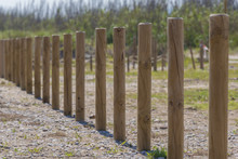 Wooden Stakes In A Row.