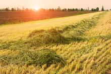 Mown Green Grass Field.