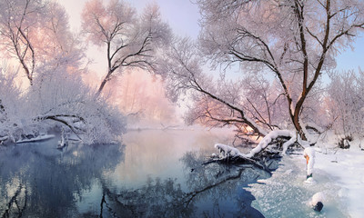 Fototapeta Drzewa Сhristmas Lace.Winter landscape in pink tones with hoarfrost everywhere.Mostly calm winter river, surrounded by trees covered with hoarfrost and snow that falls on a beautiful pink morning light.