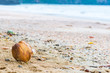 Lone brown coconut on the sandy beach of the sea in the lower left corner of the frame
