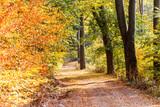 Jesienna droga w lesie na szlaku