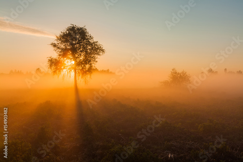 Beautiful foggy spring dawn on a field with trees Canvas Print