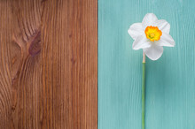 One White Daffodil On A Wooden...