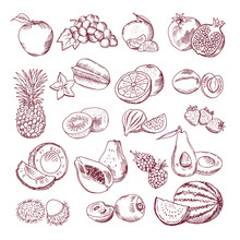 Fresh And Juicy Fruits. Vector Hand Drawn Illustration Isolate On White Background. Doodle Pictures Set