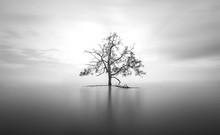 Mangrove Tree In Ocean Black And White Long Exposure